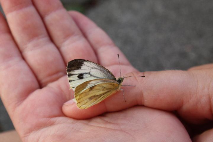 Schmetterlingsparty für Frühlingskinder