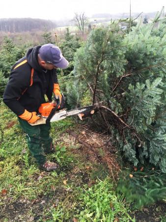 Besinnlichkeit ON: Weihnachtsbaum schlagen