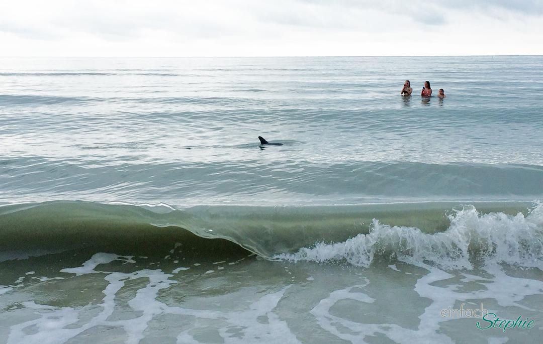 Florida mit Kindern: Sanibel Island. Schwimmen mit Delfinen