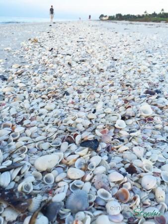 Florida mit Kindern: Sanibel Island. Die schönsten Muscheln