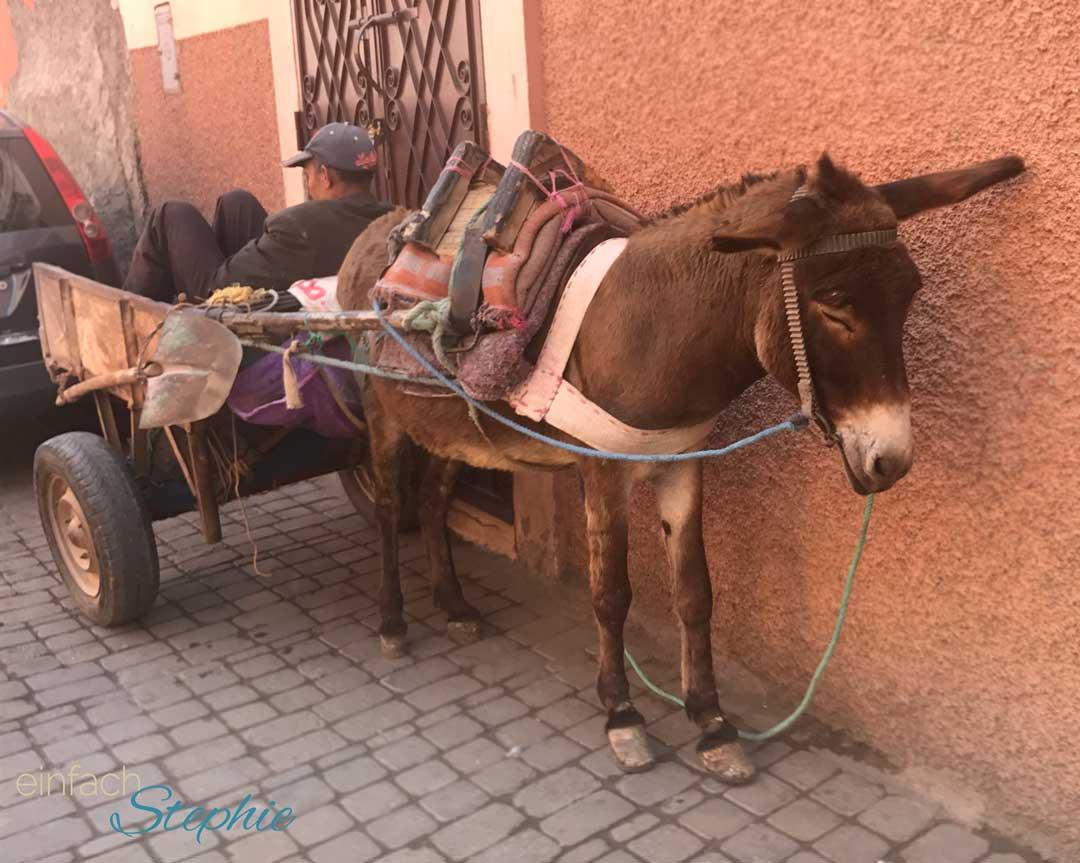 Marokko, Agadir. Esel sind hier ein typisches Transportmittel