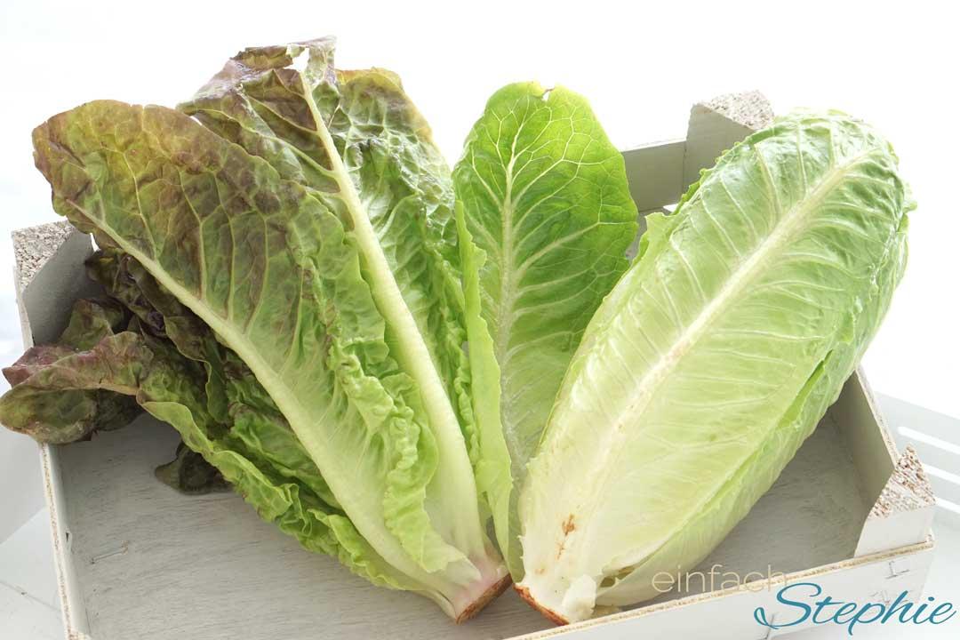 Caesars Salad. Romana Salat. Landsalat