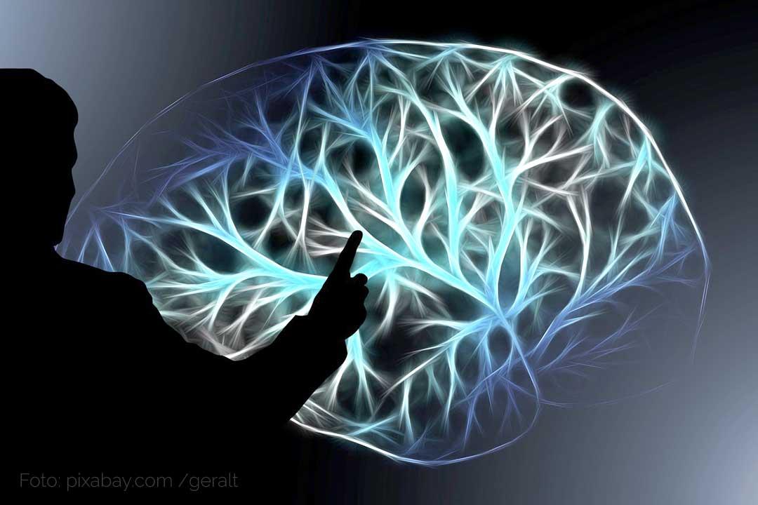 Bio-Strukturanalyse / Persönlichkeitsanalyse. Gehirnbereiche erklärt