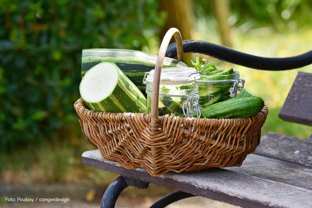 Zucchini Chips zum Picknick