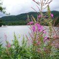 Rundreise Schottland mit Kindern. Loch Lomond in den Highlands