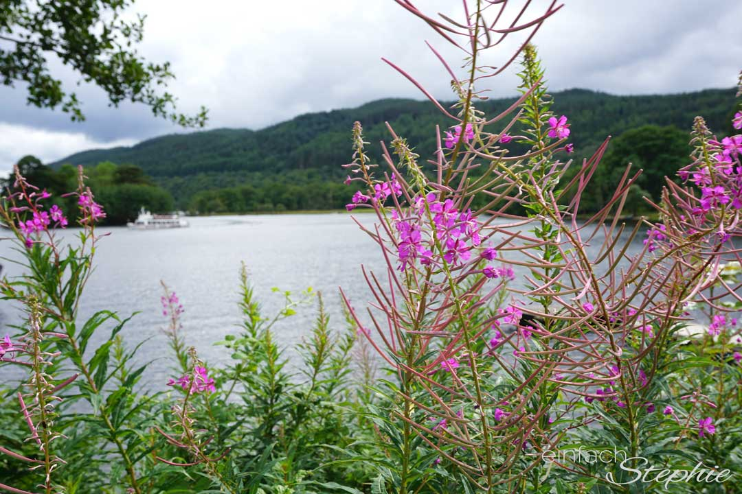 Loch Lomond in den Highlands Schottland Rundreise mit Kindern