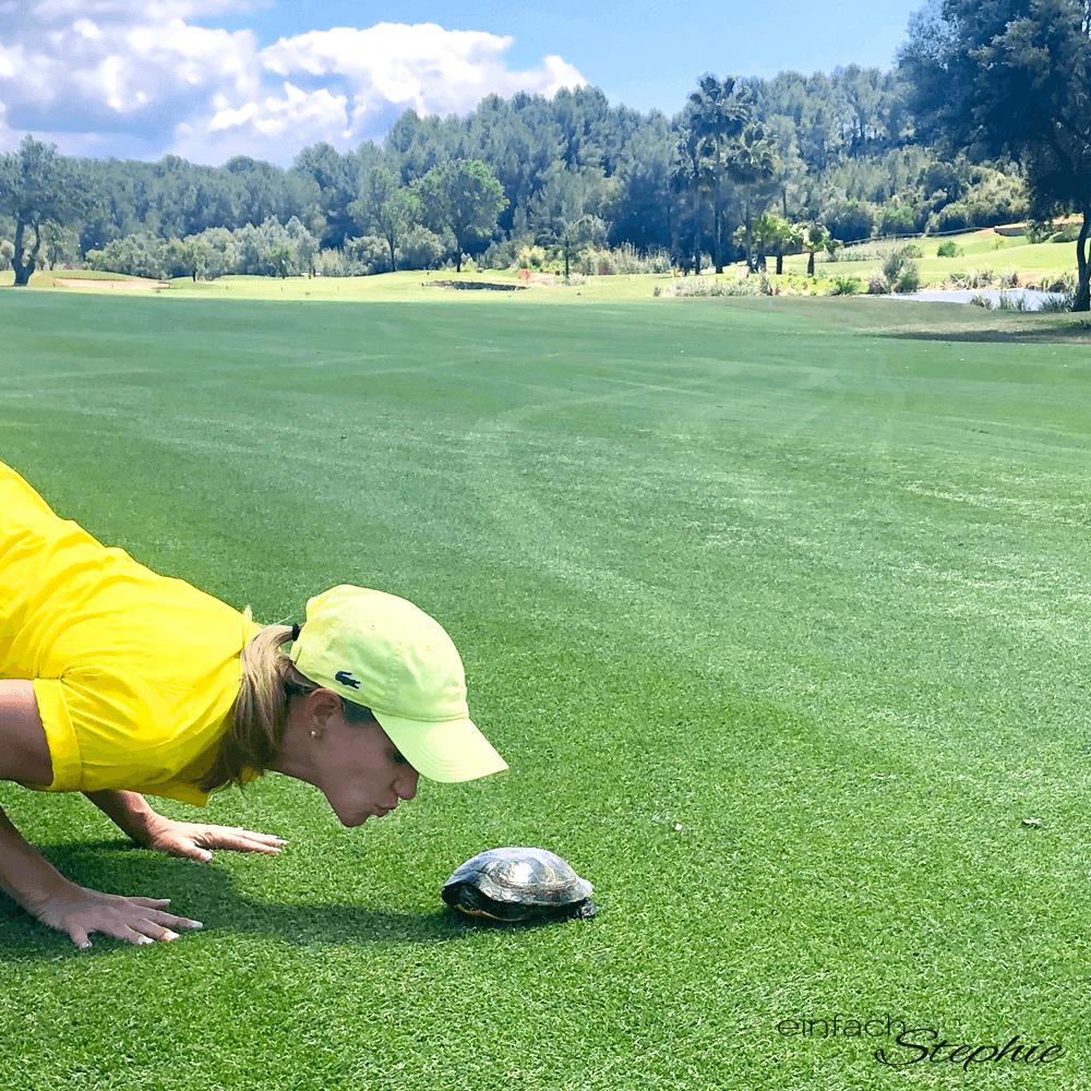 Natur pur: Tierwelt auf dem Golfplatz. Schildkröten auf Mallorca
