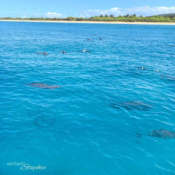 Delfin Schwarm im Meer vor Kauai, Hawaii