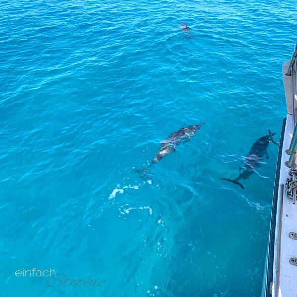 Delfine schwimmen ganz nah an den Katamaran heran. Schnorcheln auf Kauai, Hawaii