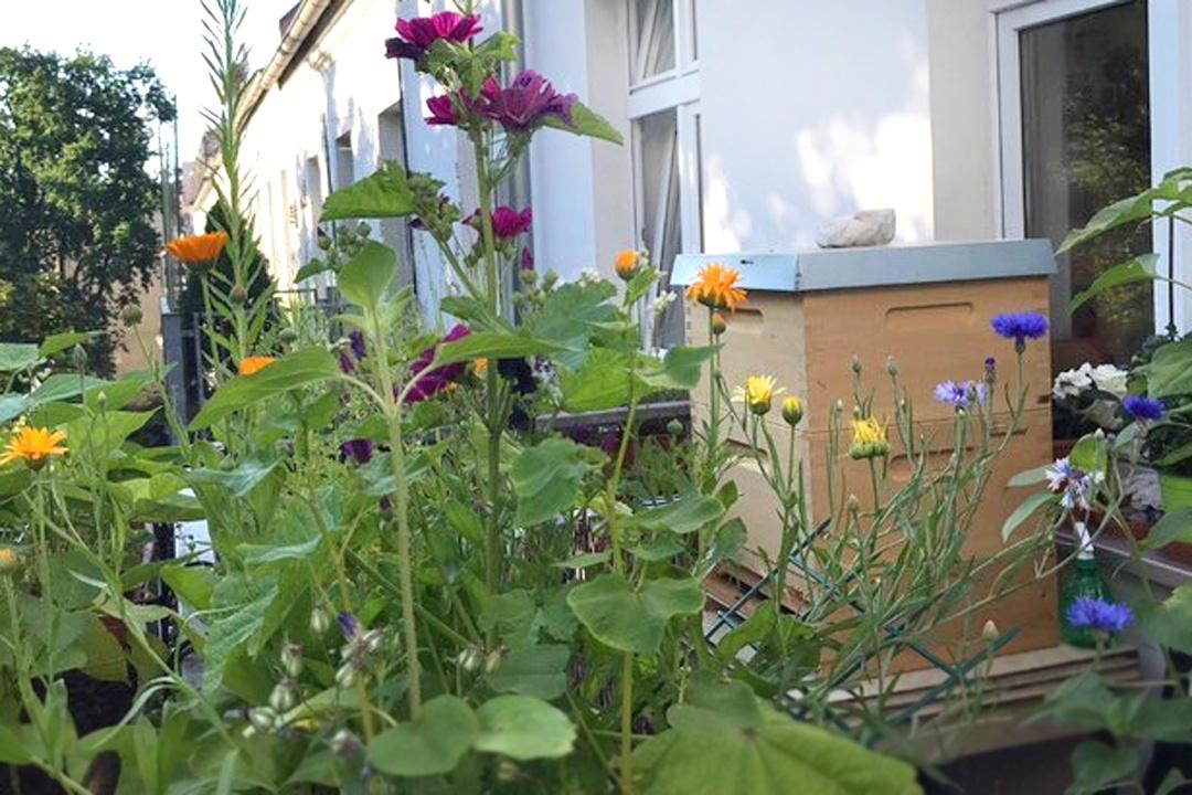 Eigene Bienen im Garten halten. Hobbyimker werden. Erfahrungen und Tipps