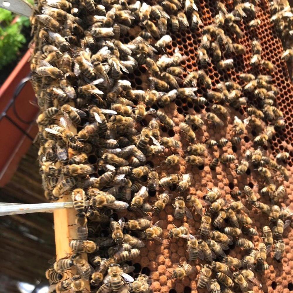 Bienen bei der Arbeit. Eigene Bienen im Garten halten